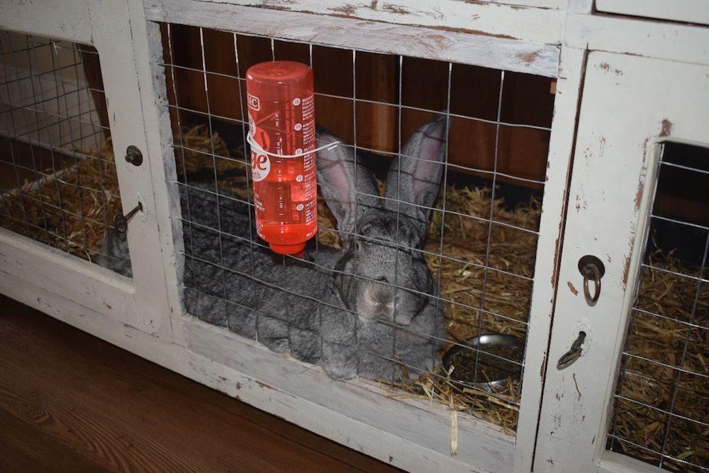 Foto van konijn in hok