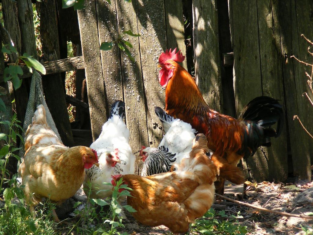 De kans op vogelgriep vanuit Rusland wordt groter