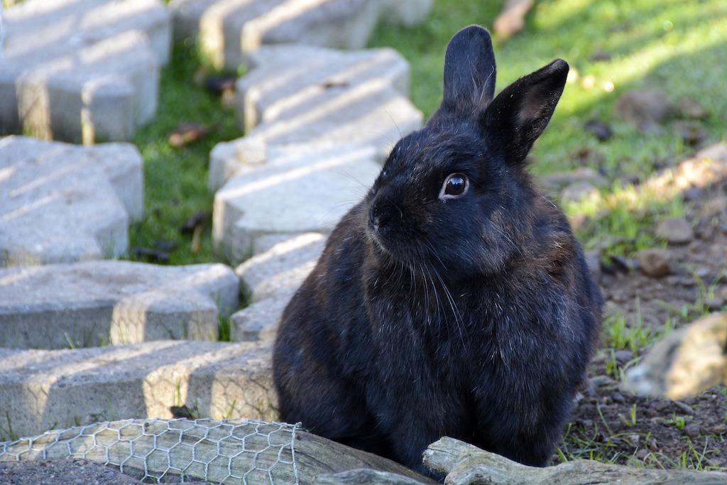 Vaccinatie konijnen mei 2019