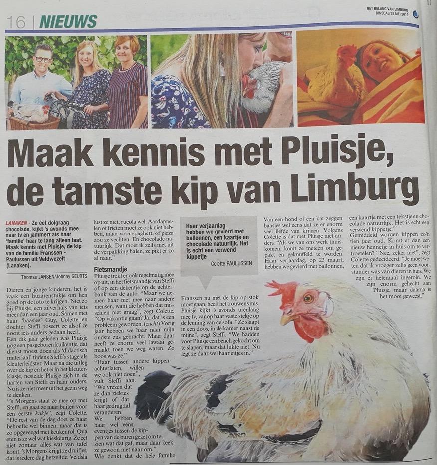 Pluisje is misschien wel de tamste kip van Nederland
