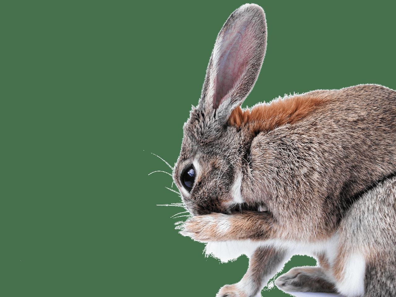 Header_konijn