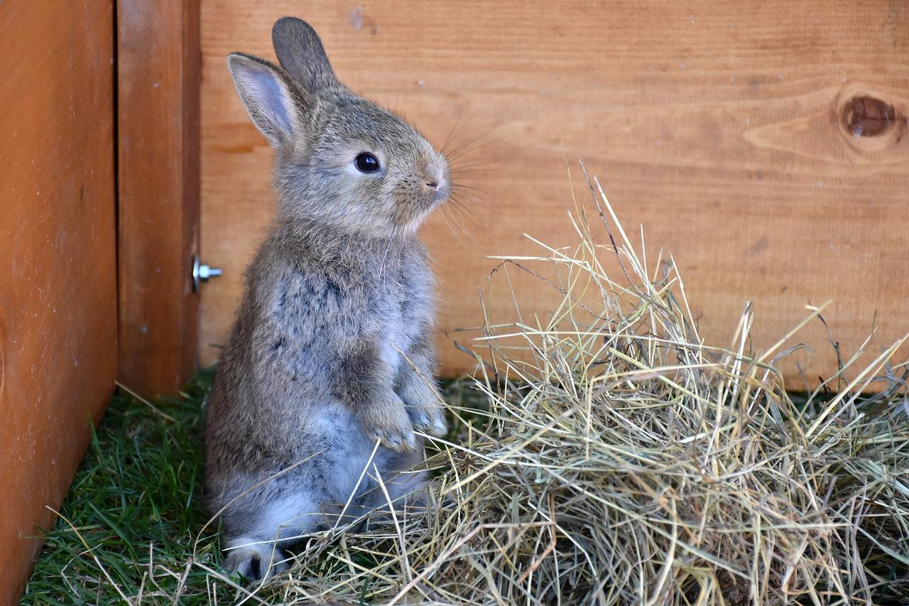 Internationale konijnen dag